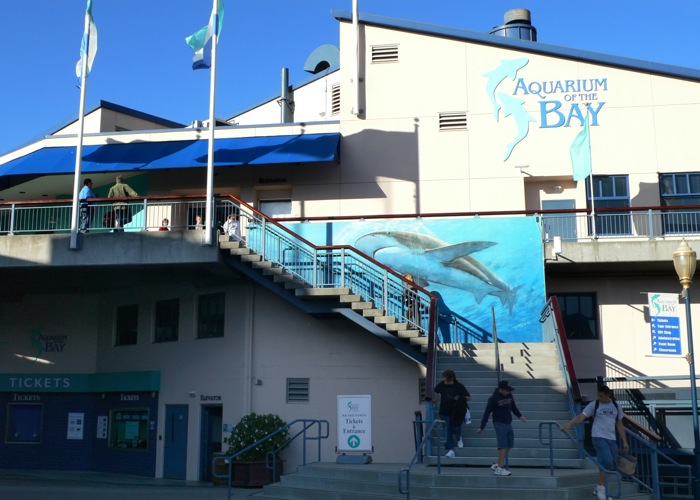 Stores aquarium of the bay for Fish store san francisco
